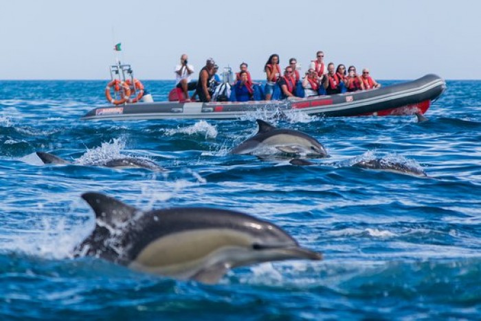Dolphin Watching Portugal Home - Portugal propety experts