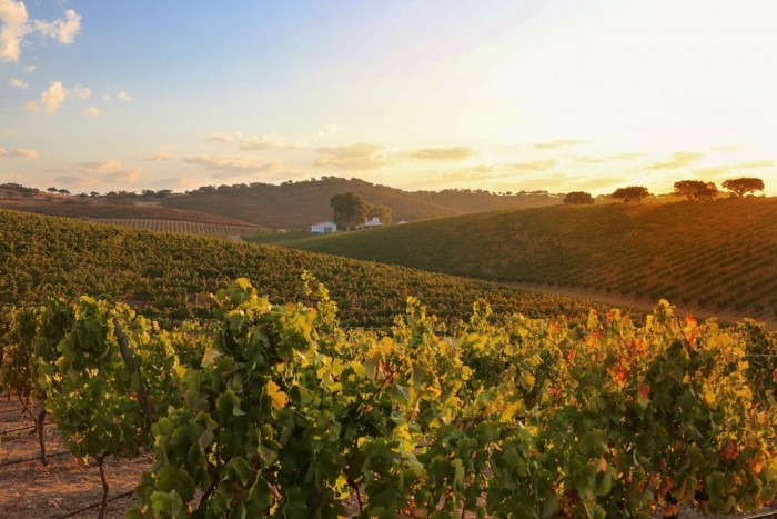 Alentejo Wine Route Portugal Home - Portugal propety experts