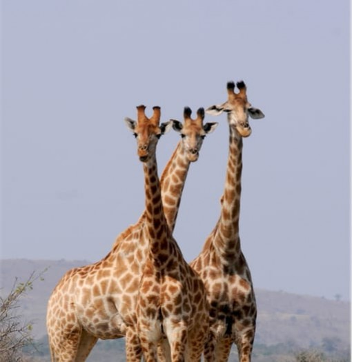 Badoca Safari Park Portugal Home - Portugal propety experts